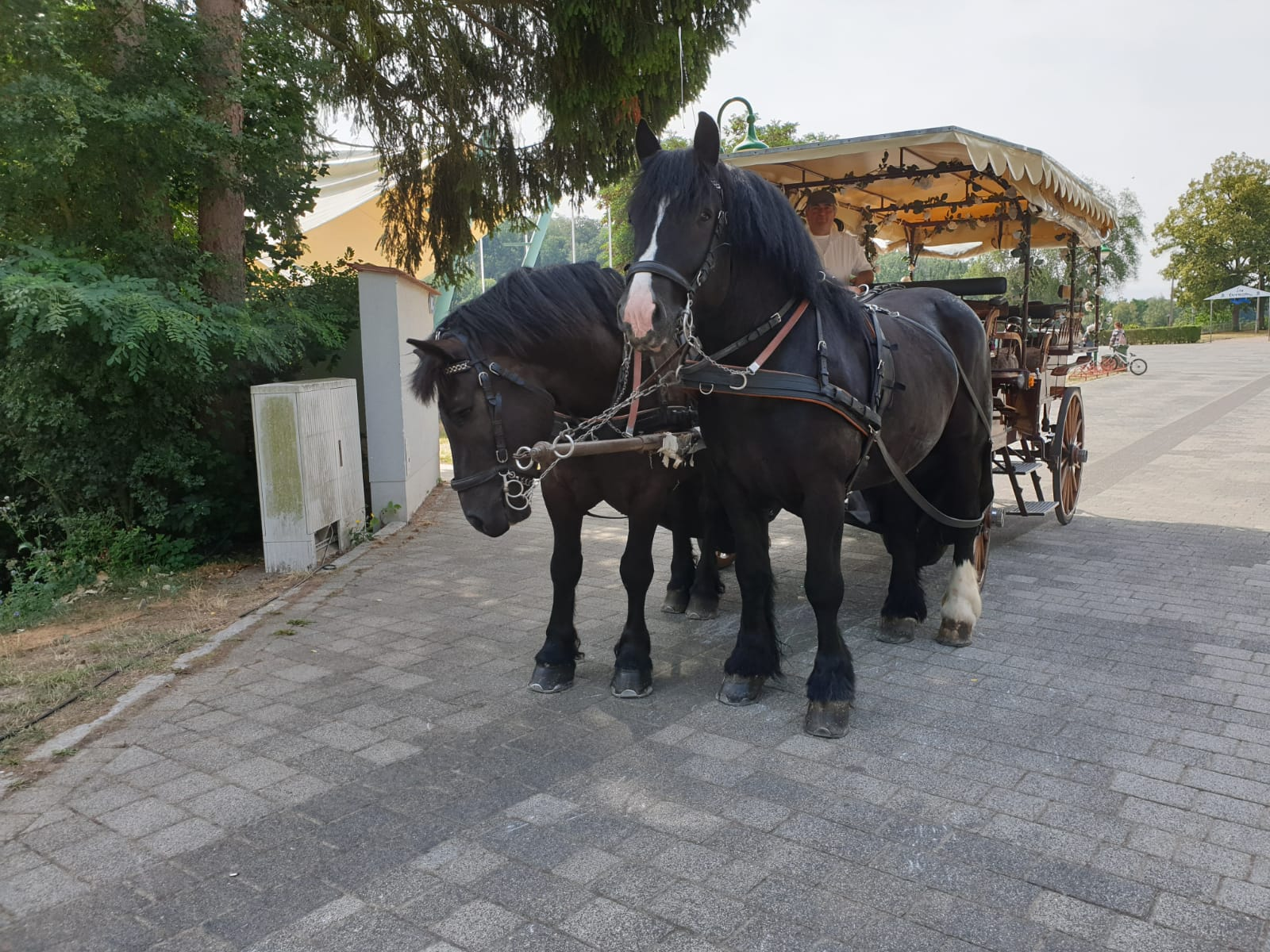 pferdekutsche kriebstein